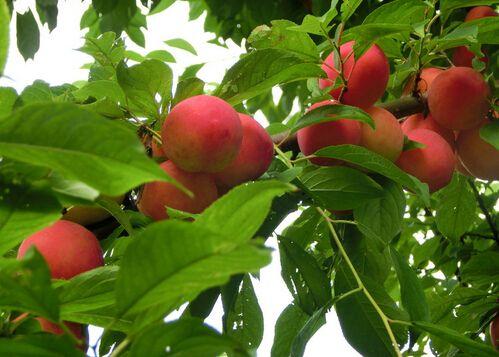 果园果树栽种新建实验室检测项目及仪器方案