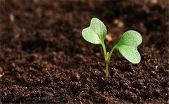 浅谈土壤养分检测仪的检测方法